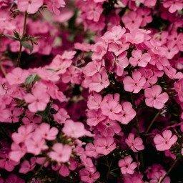 35 frases de flores para dar cor à sua vida