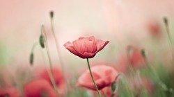 55 frases de bom dia com flores para encher todos os instantes de beleza
