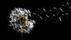 Despedida de um amor impossível: como dizer adeus e seguir em frente