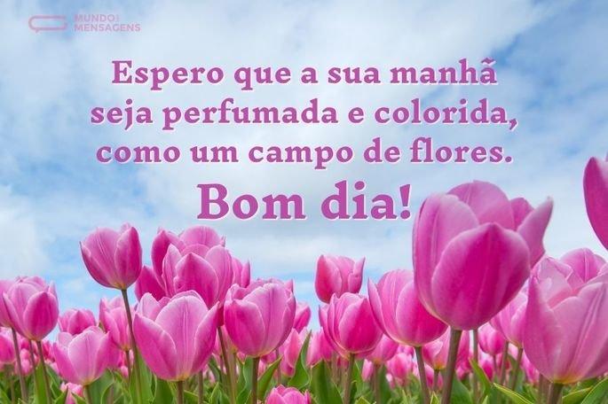 Espero que a sua manhã seja perfumada e colorida, como um campo de flores. Bom dia!