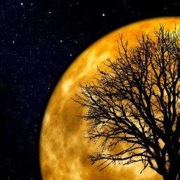 40 imagens de boa noite com frases para um final de dia especial