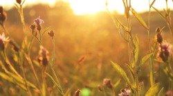 40 imagens de bom dia com frases que vão aumentar o ânimo e a positividade