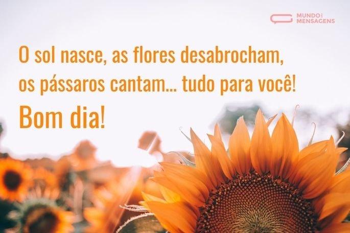 O sol nasce, as flores desabrocham, os pássaros cantam… tudo para você! Bom dia!
