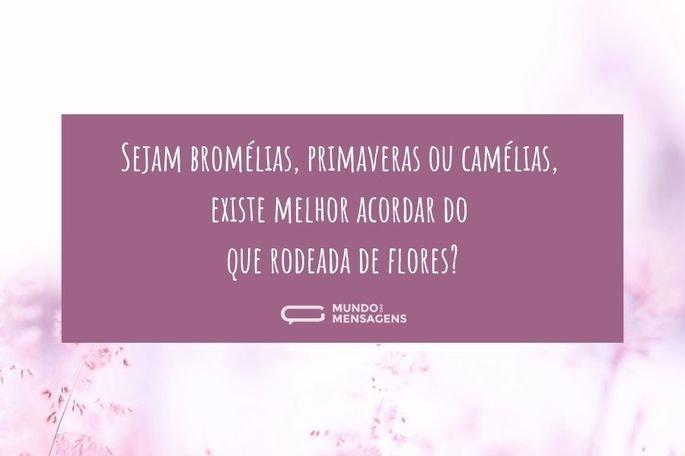 Sejam bromélias, primaveras ou camélias, existe melhor acordar do que rodeada de flores?