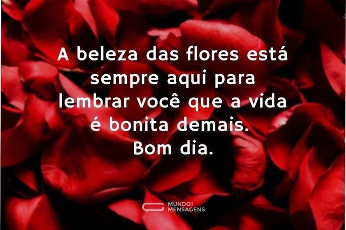 A beleza das flores está sempre aqui para lembrar você que a vida é bonita demais. Bom dia.
