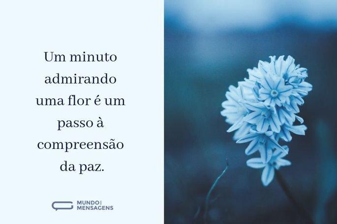Um minuto admirando uma flor é um passo à compreensão da paz.