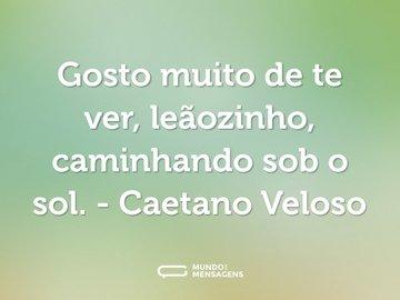 Gosto muito de te ver, leãozinho, caminhando sob o sol. - Caetano Veloso